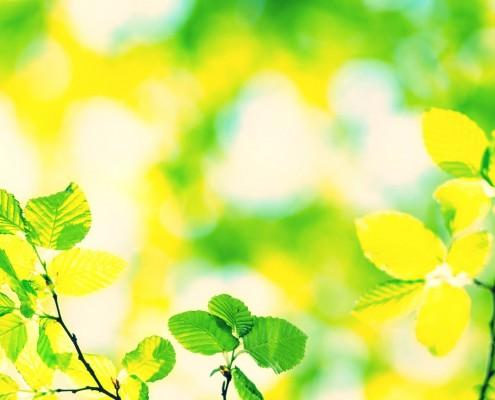 Spring green Leafs - defocused Background