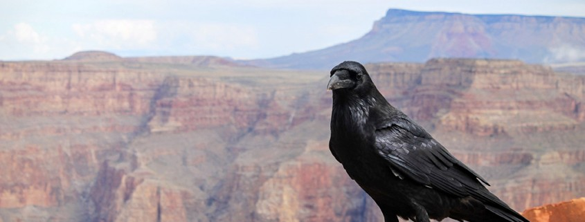 The-Day-I-Compared-My-Mum-to-a-Crow