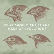 What-should-christians-make-of-evolution